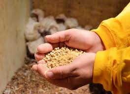 Wide Scope of Feed China 2014 in China Huge Market